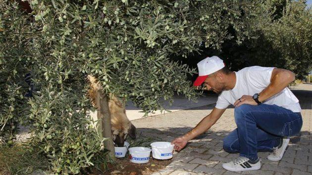 Döşemealtı Belediyesi'nden sokak hayvanlarına yönelik anlamlı çalışma