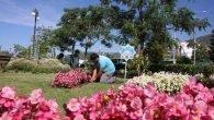 Alanya çiçek açıyor