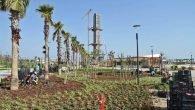EXPO Alanı'na 1,5 milyon yerötücü dikilecek