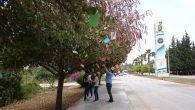 Üniversitede Yesevi ağacı