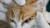 Üç kulaklı kedi görenleri şaşırttı