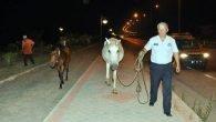Firari atlar yol kesti